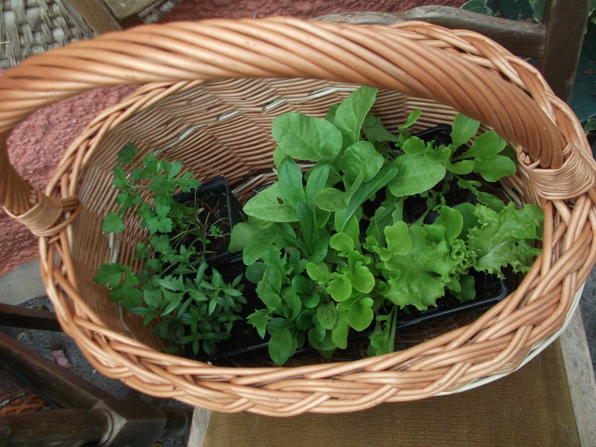 permaculture @ bealtainecottage.com 005