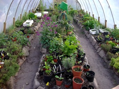 Seed growing in the polytunnel in late April at Bealtaine Cottage