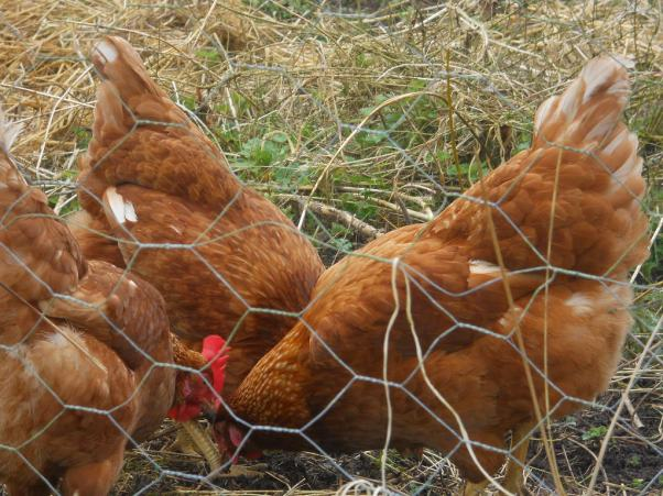 Bealtaine Permaculture
