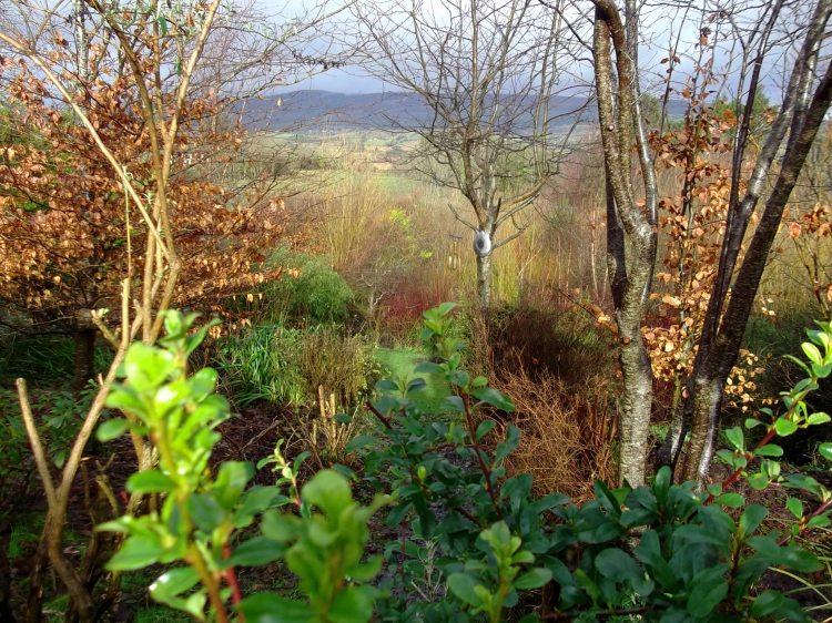 Plant trees in Ireland