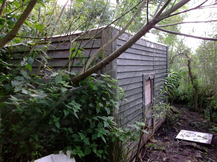 Henhouse at Bealtaine  Permaculture Cottage