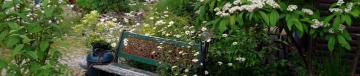 Dog Daisy bench
