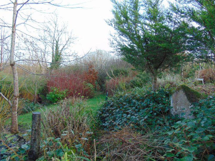 Permaculture gardens at Bealtaine Cottage Feb 2016
