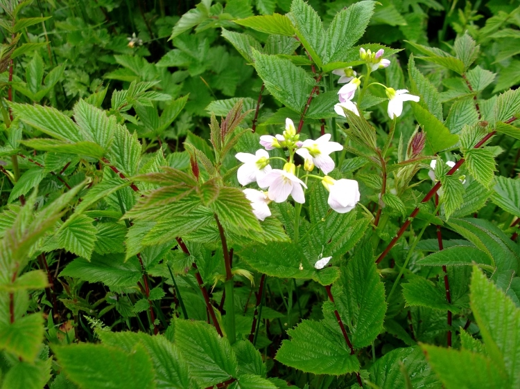 Mayflower and meadowsweet