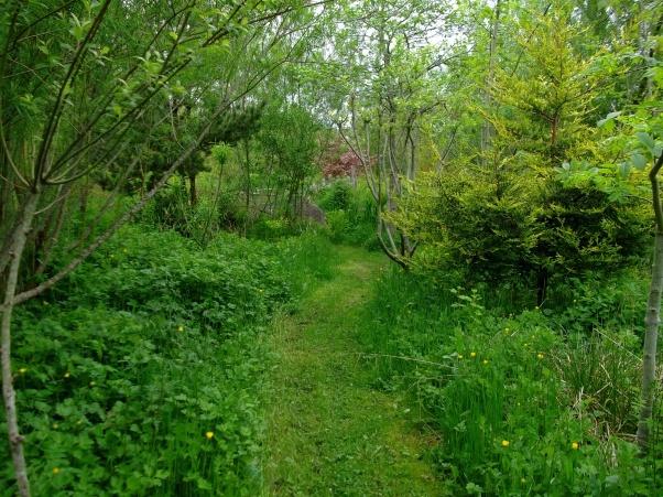 Bog garden at Bealtaine cottage