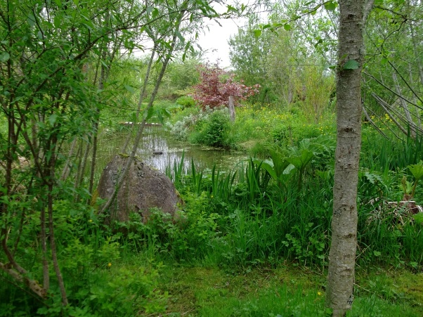 Pond at bealtaine cottage