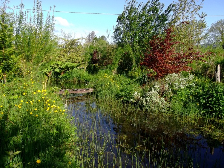 Trees in the pond garden at Bealtaine Cottage