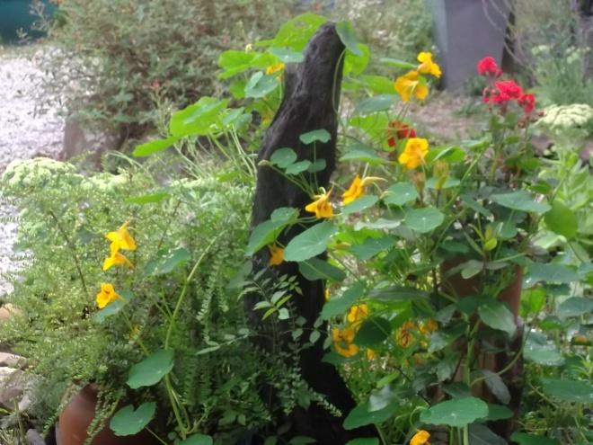 Bog Oak garden sculpture