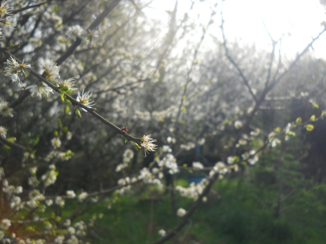 April Bealtaine Cottage 2011 013