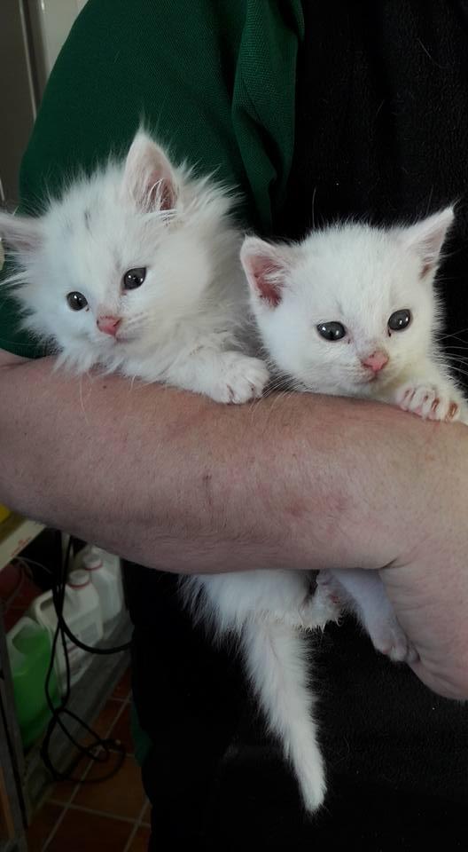 cats-1