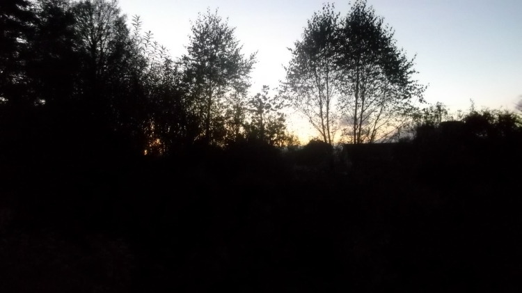 winter sunrise at Bealtaine Cottage permaculture gardens