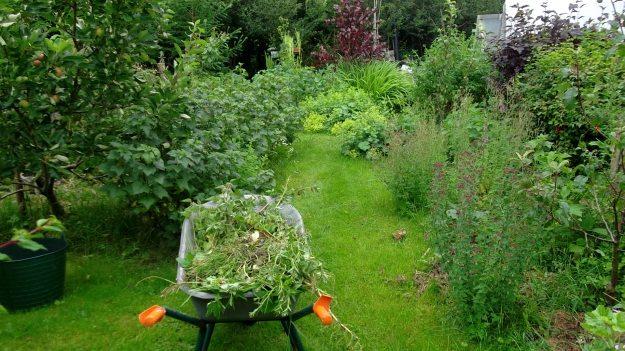 Bealtaine Cottage wheelbarrow to compost heap