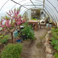 Permaculture Fruit Garden